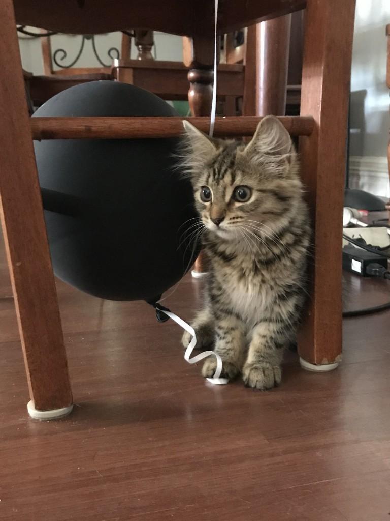 Cat hiding under a chair